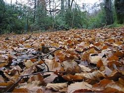 temperate leaf_litter_1