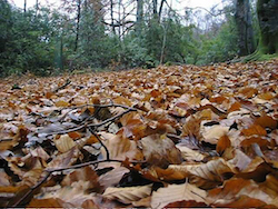 temperate leaf_litter_1