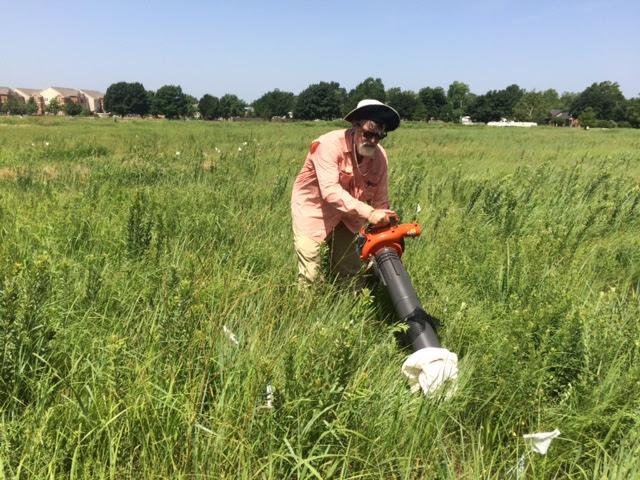 mikek-vacuuming-bugs-saltgrass